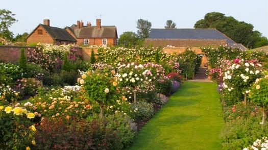 David Austin's Rose Garden