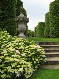 Hydrangeas, decorative urn and topiary walk