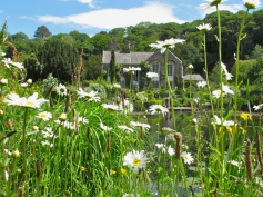 View through daisies to Gresgarth Hall