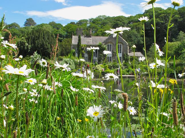 View through daisies to Gresgarth Hall