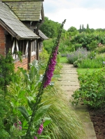 Cottage garden with foxgloves