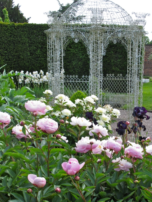 Picture of peonies and irises at Arley Hall
