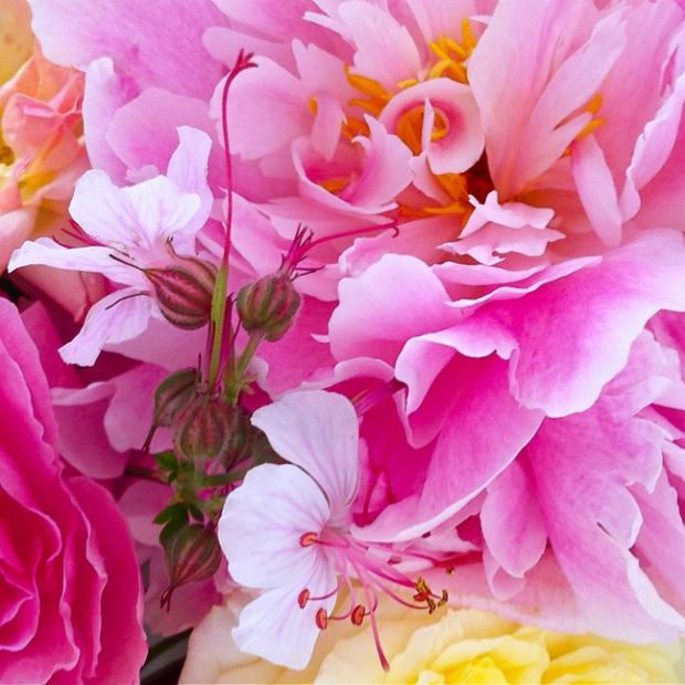 Abstract photo of petals