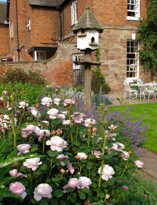 Roses in a cottage garden