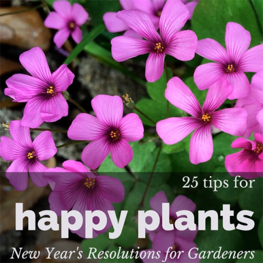25 tips for happy plants