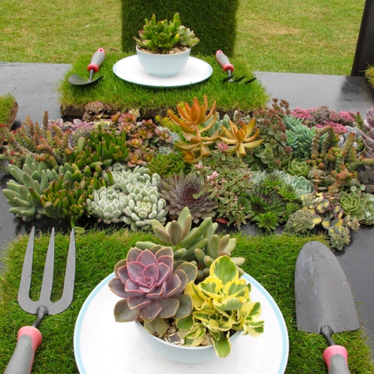 Quirky table setting with succulents