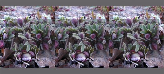 Flower bud tile effect