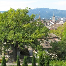 Garden with a view of Zurich