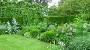 Green border with alliums