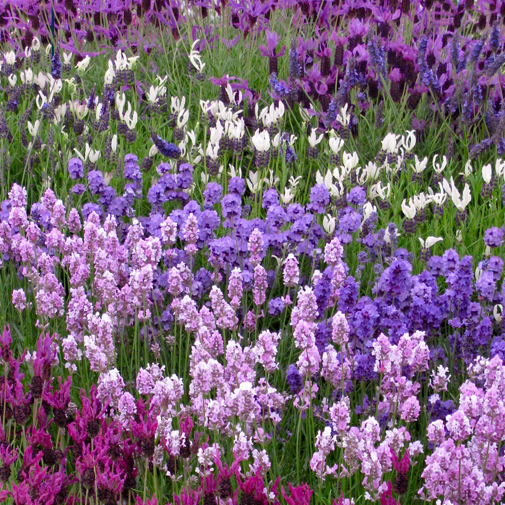 Recipe For A Traditional English Cottage Garden
