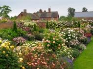 David-Austin-rose-garden