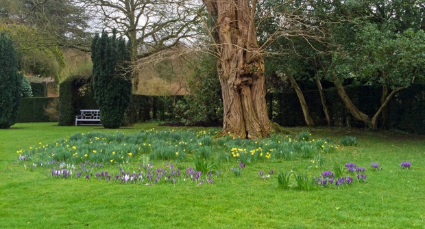 Winter meadow with daffodils and crocuses
