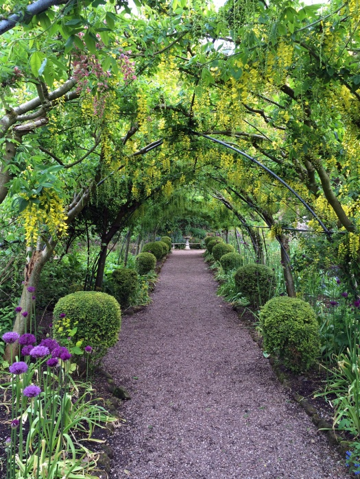 Laburnum walk at the Dorothy Clive Garden
