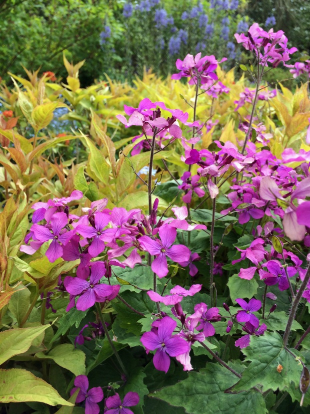 Plant combinations lunaria