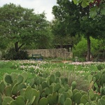 Wildflower garden with cactus
