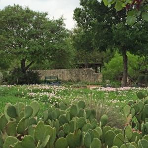 Wildflower garden with cactus