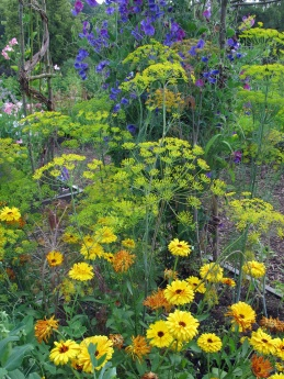 Flowers for beneficial insects