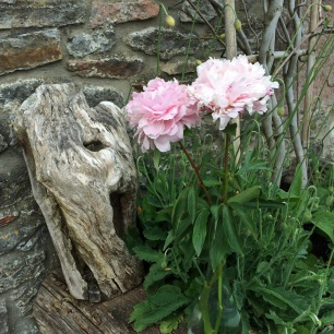 Peonies with natural textures