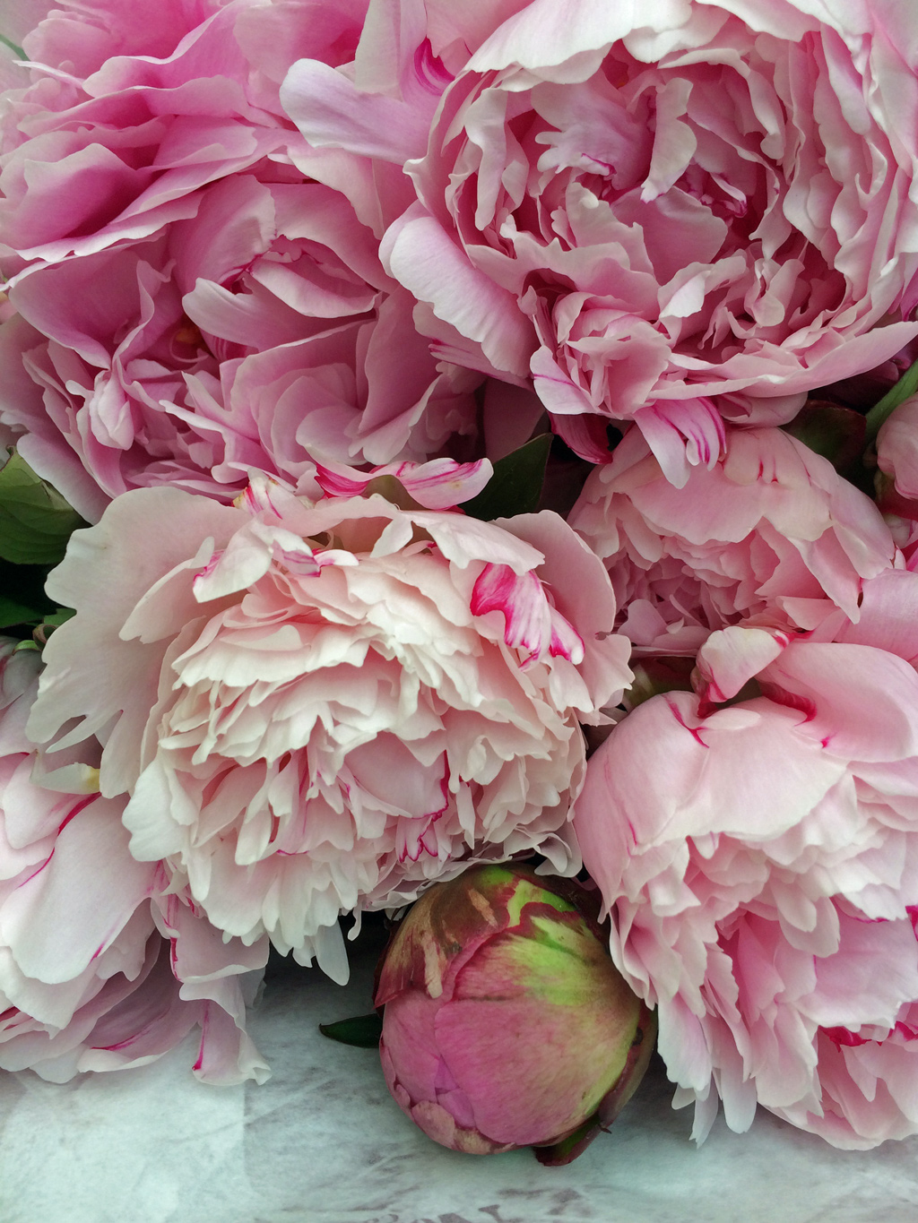 Peony Season Is Here Susan Rushton