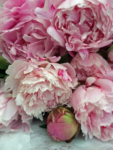 Cut flowers: peonies