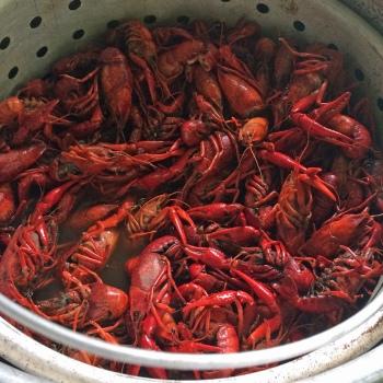 Pot-of-Crayfish