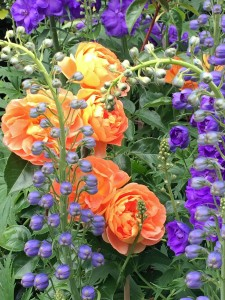 Roses and delphiniums