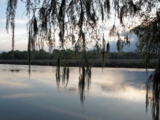 Lake and skyline with Spanish moss