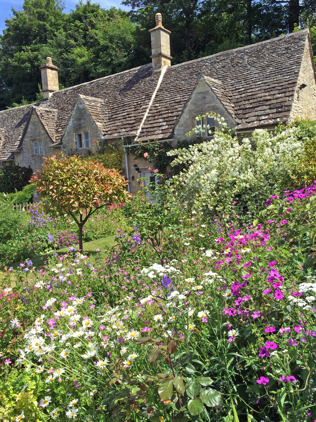 Traditional Homes And Cottage Garden Plants