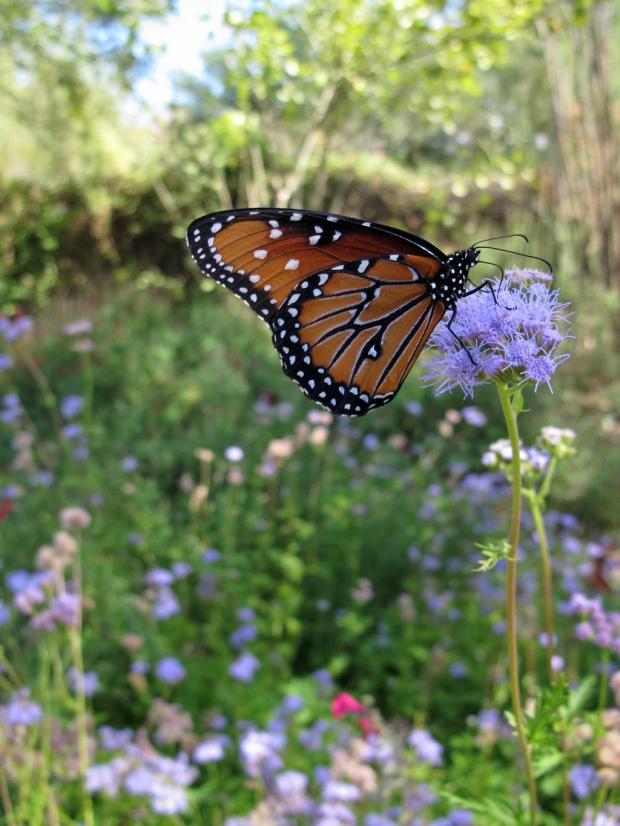 Butterfly in wildflowers