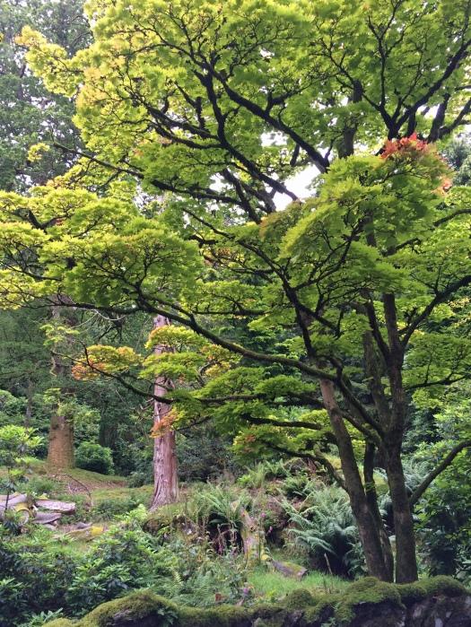 Grasmere woodland view