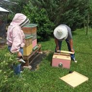 Beekeepers1