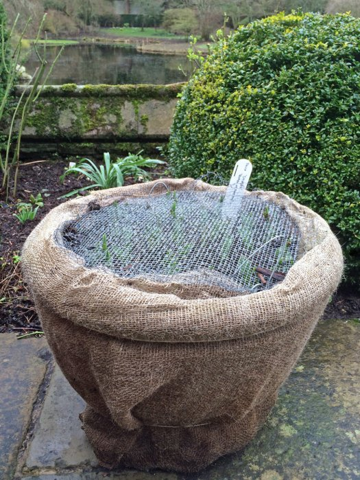 Pots wrapped up in burlap