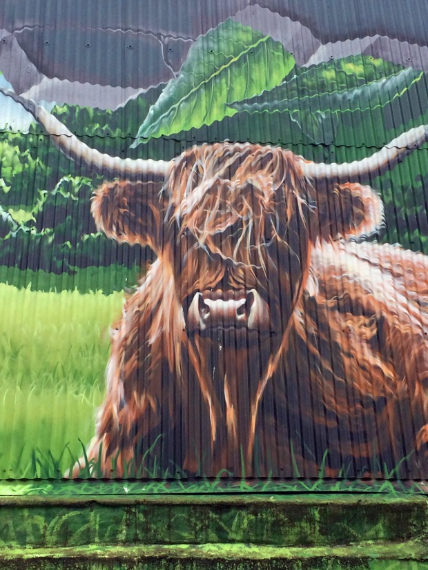 Highland cattle mural