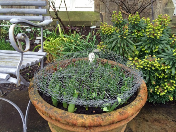 Protecting bulbs with wire mesh