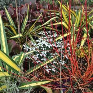 Companion planting for snowdrops