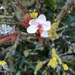 Blossoms and twigs