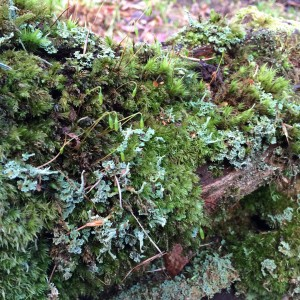 Mossy bank