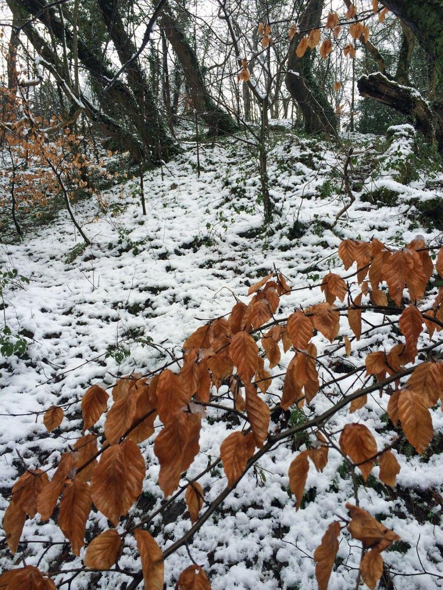 Wintery leaves