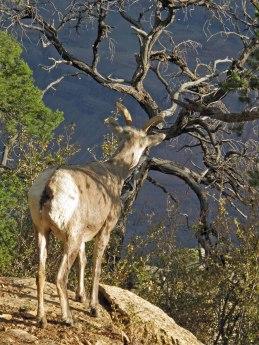Deer looking out