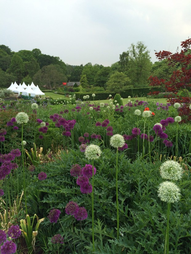 Alliums at Harlow Carr Flower Show