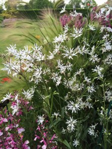 Ethereal flowers