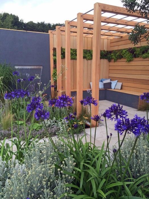Blue Agapanthus in the Coastal Garden