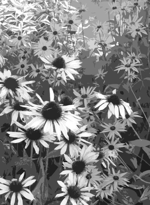 Raggedy daisies