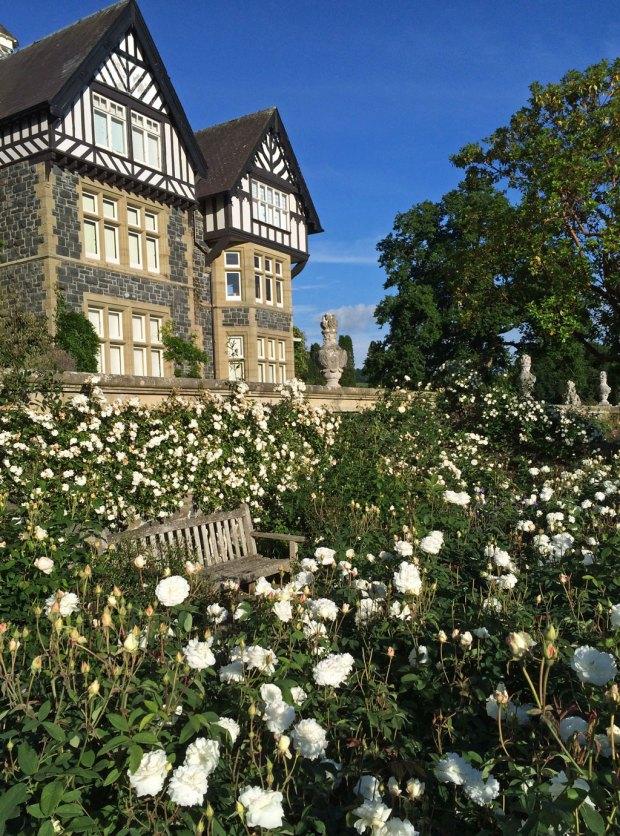 White roses at Bodnant Gardens
