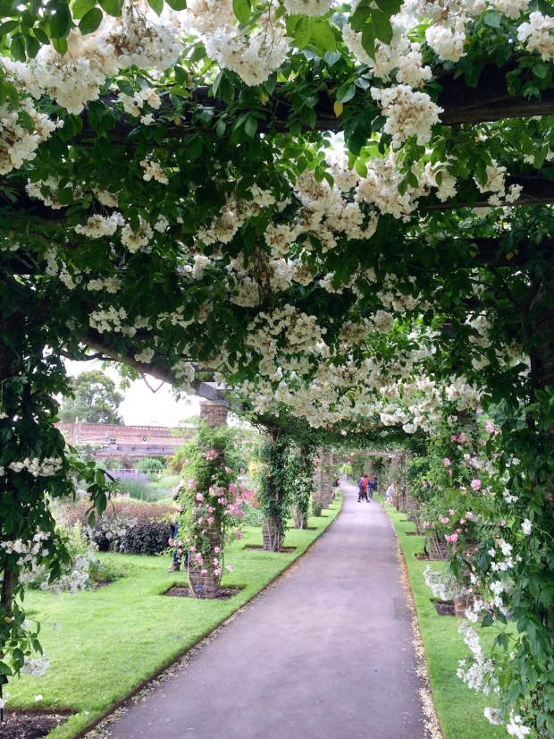 Pergola of Rambling Roses