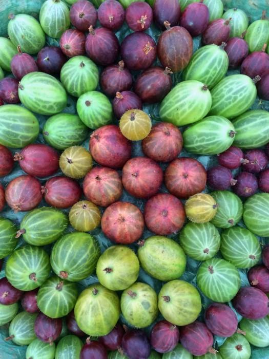 Assortment of Gooseberries