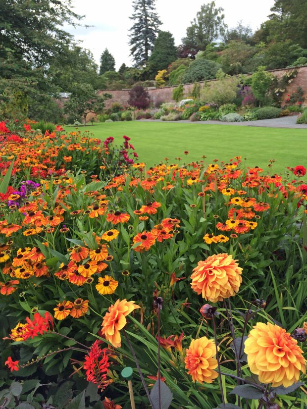 Orange border of heleniums, dahlias and crocosmia