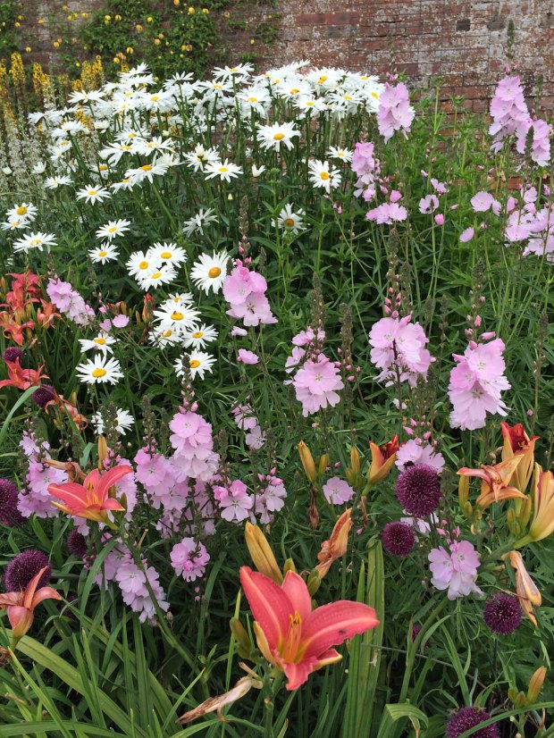 Daisies and daylilies in a mixed border