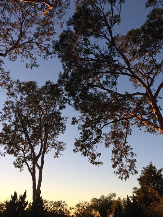 Garden silhouette