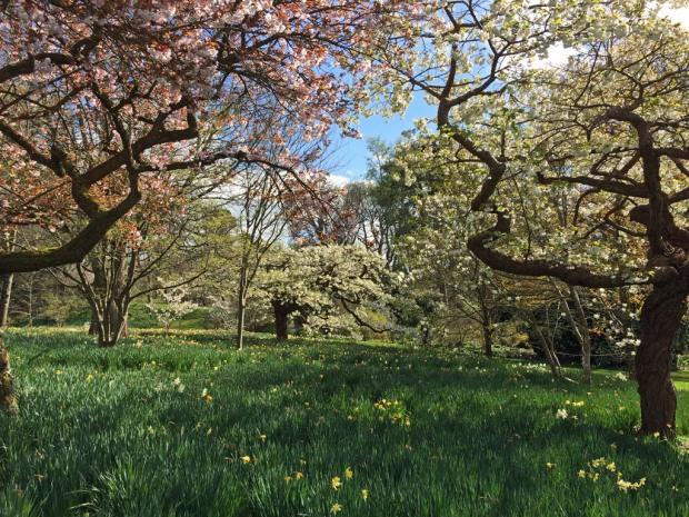 Blossom trees at Bodnant Gardens